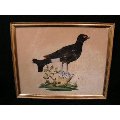 Oiseau A Plumes Gouache Fin XVIIIème