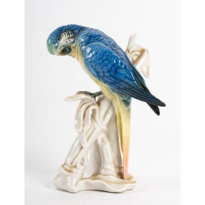 Perruche d'Australie - Karl Ens - 20ème