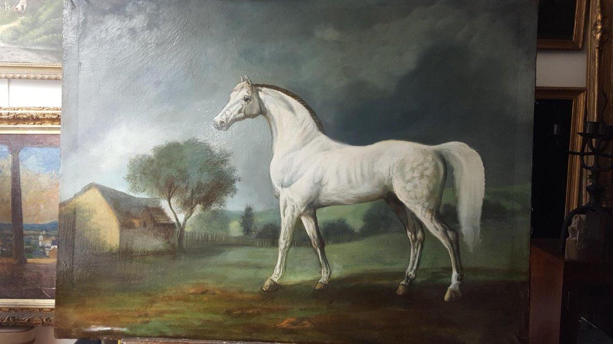 Cheval Blanc Arabe