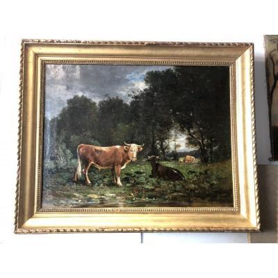 Troupeau De Vaches à La Lisière Du Bois.