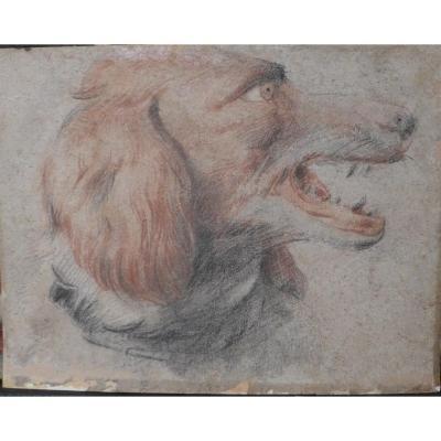 Drawing 17 1st Workshop Frans Snyders Dog D Arret 34 X26 Flemish