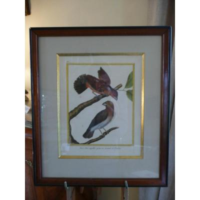 Watercolor Martinet Engraving Late Eighteenth