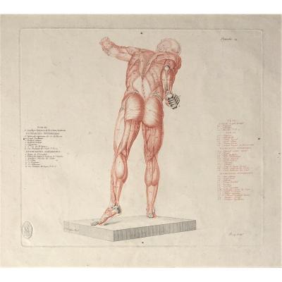 "Jean-Galbert Salvage (1770-1813). "" Anatomie du gladiateur combattant"". 1812. Gravure."
