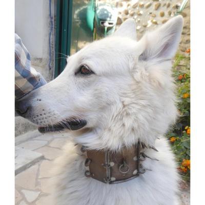 Large Wrought Iron Shepherd Dog Armed Collar, 19th