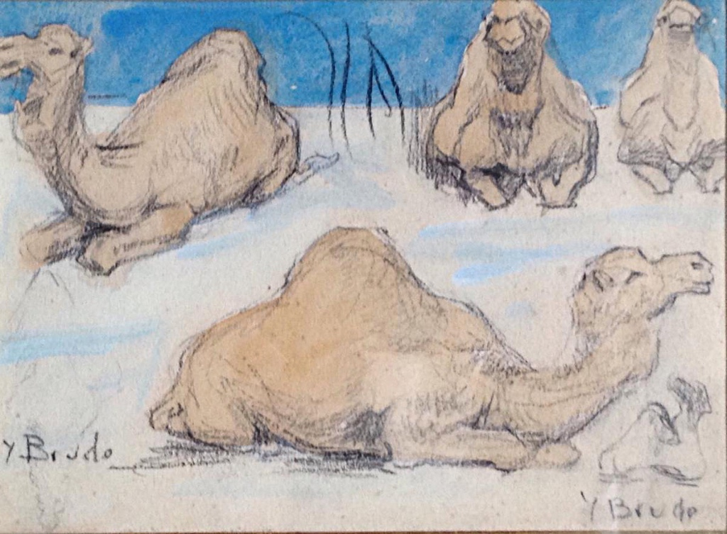 Dromedary Study Drawing Watercolor And Pencil Yvonne Brudo Orientalism