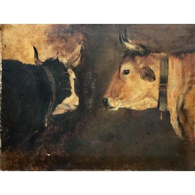 Study Of Cows Oil On Paper Beginning Of XIXth Century