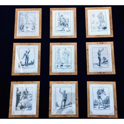 Suite De 9 Gravures Anatomiques  Encadrées Du XVIIIÈme