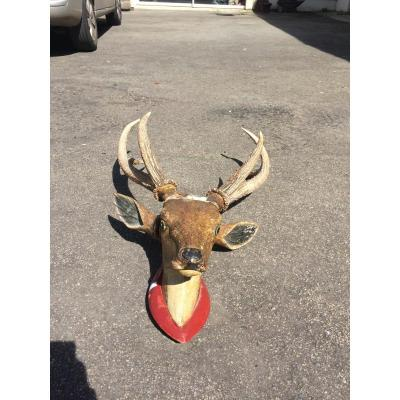 Hunting Trophy - Deer Head