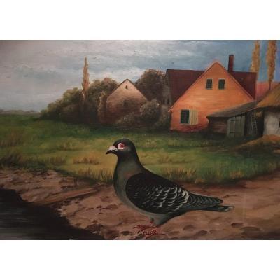 Portrait D'un Pigeon De Concours 85x60 Encadré.