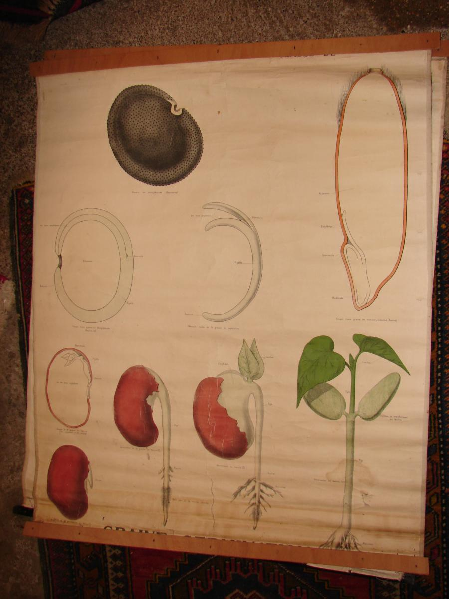 Lot Of 12 Educational Posters Circa 1900 In The State-photo-2