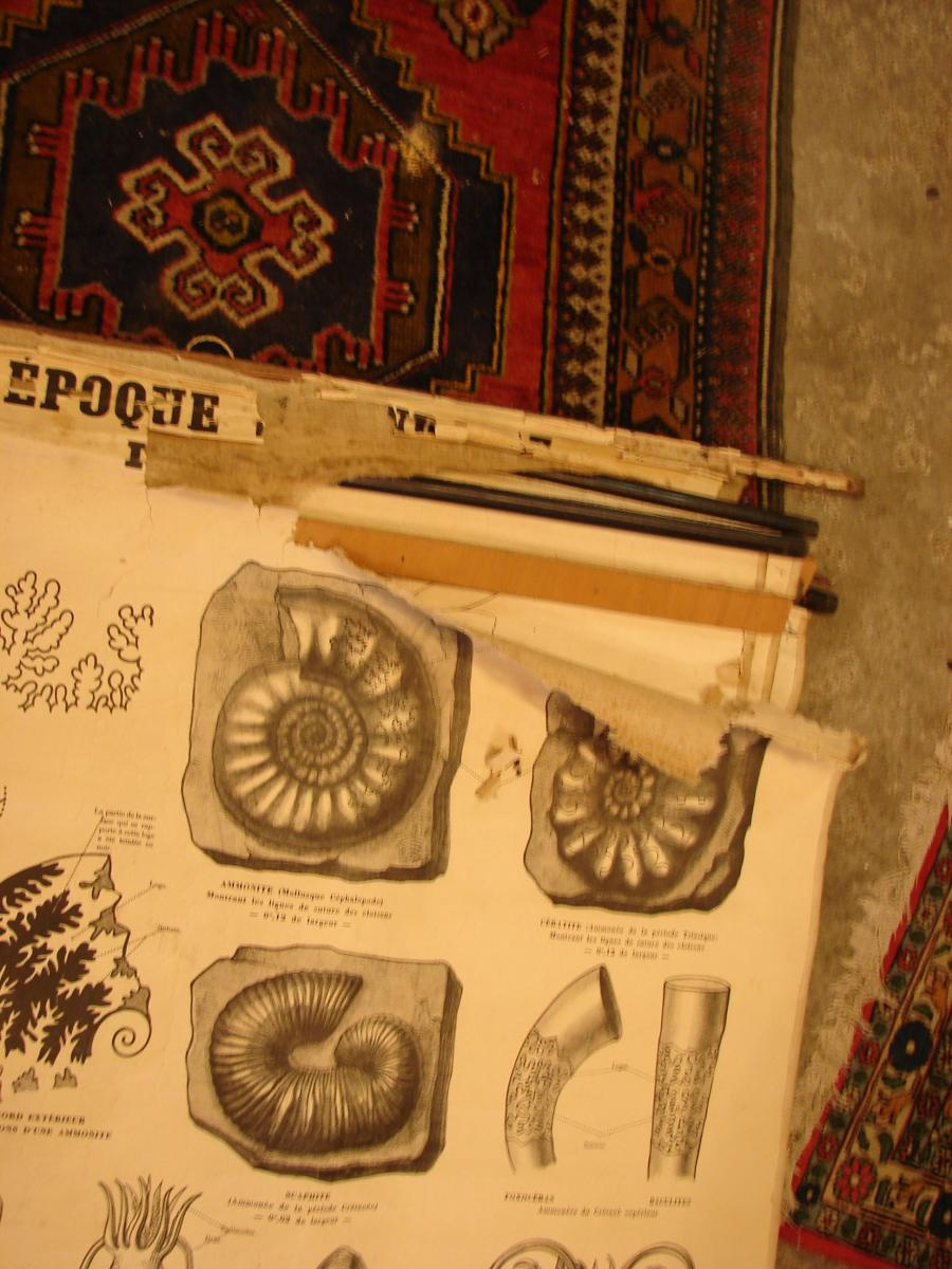 Lot Of 12 Educational Posters Circa 1900 In The State-photo-4