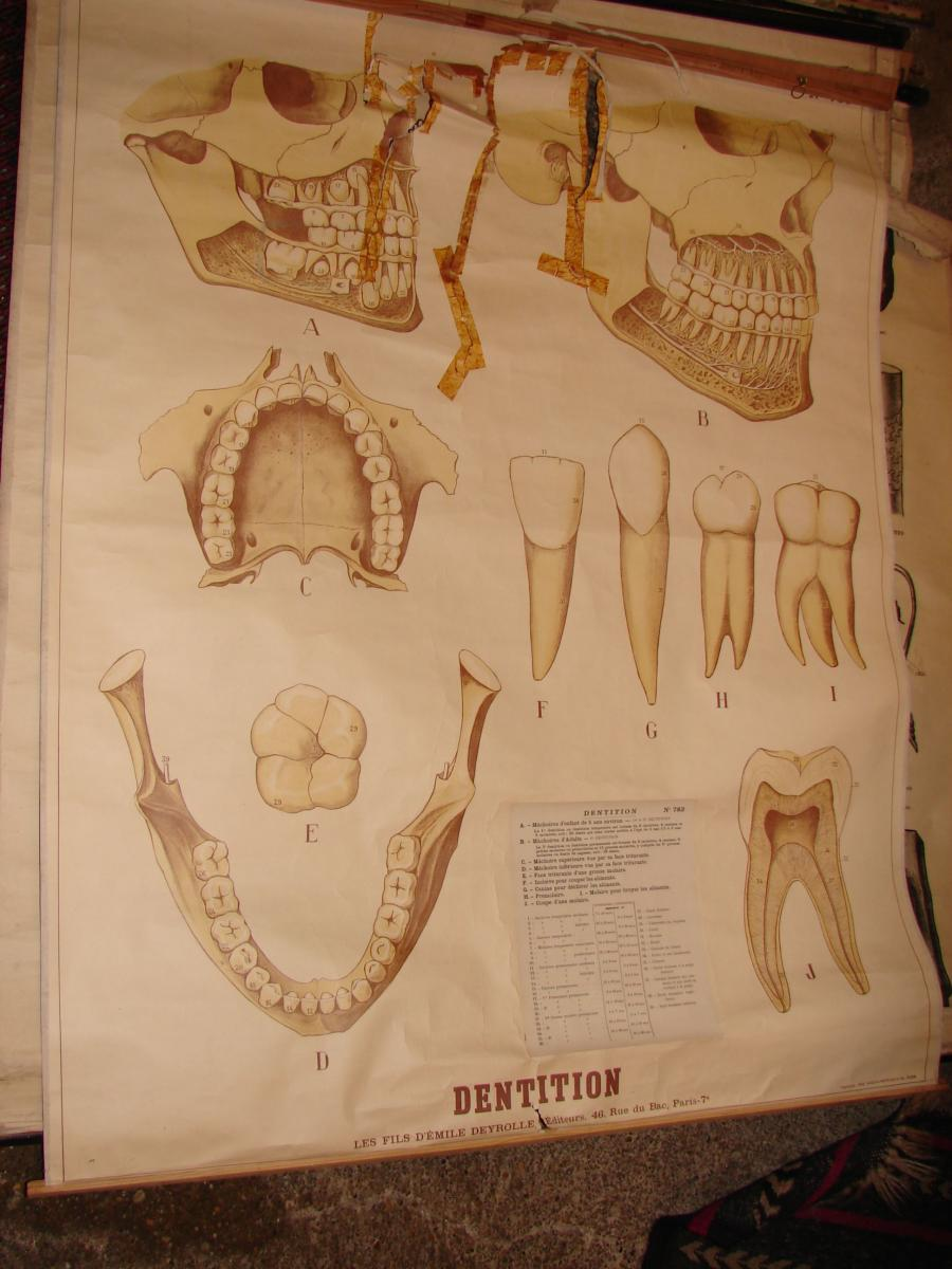 Lot Of 12 Educational Posters Circa 1900 In The State-photo-5