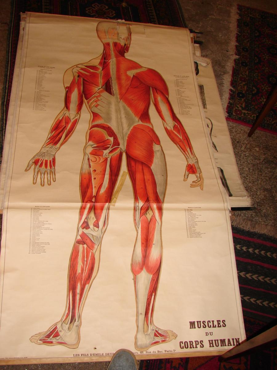 Lot Of 12 Educational Posters Circa 1900 In The State-photo-8
