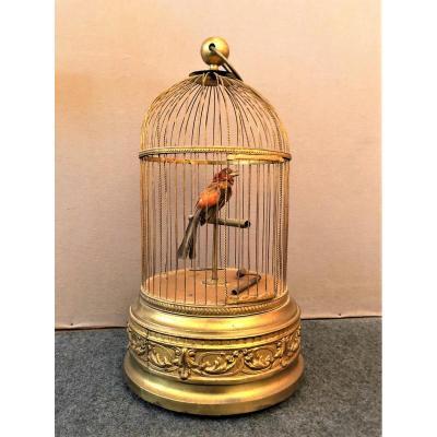 Grande Cage à Oiseau Chanteur