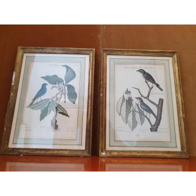 Paire De Gravures , Oiseaux ,jm Seligmann, XVIII°.