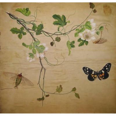 Aquarelle fleurs et insectes