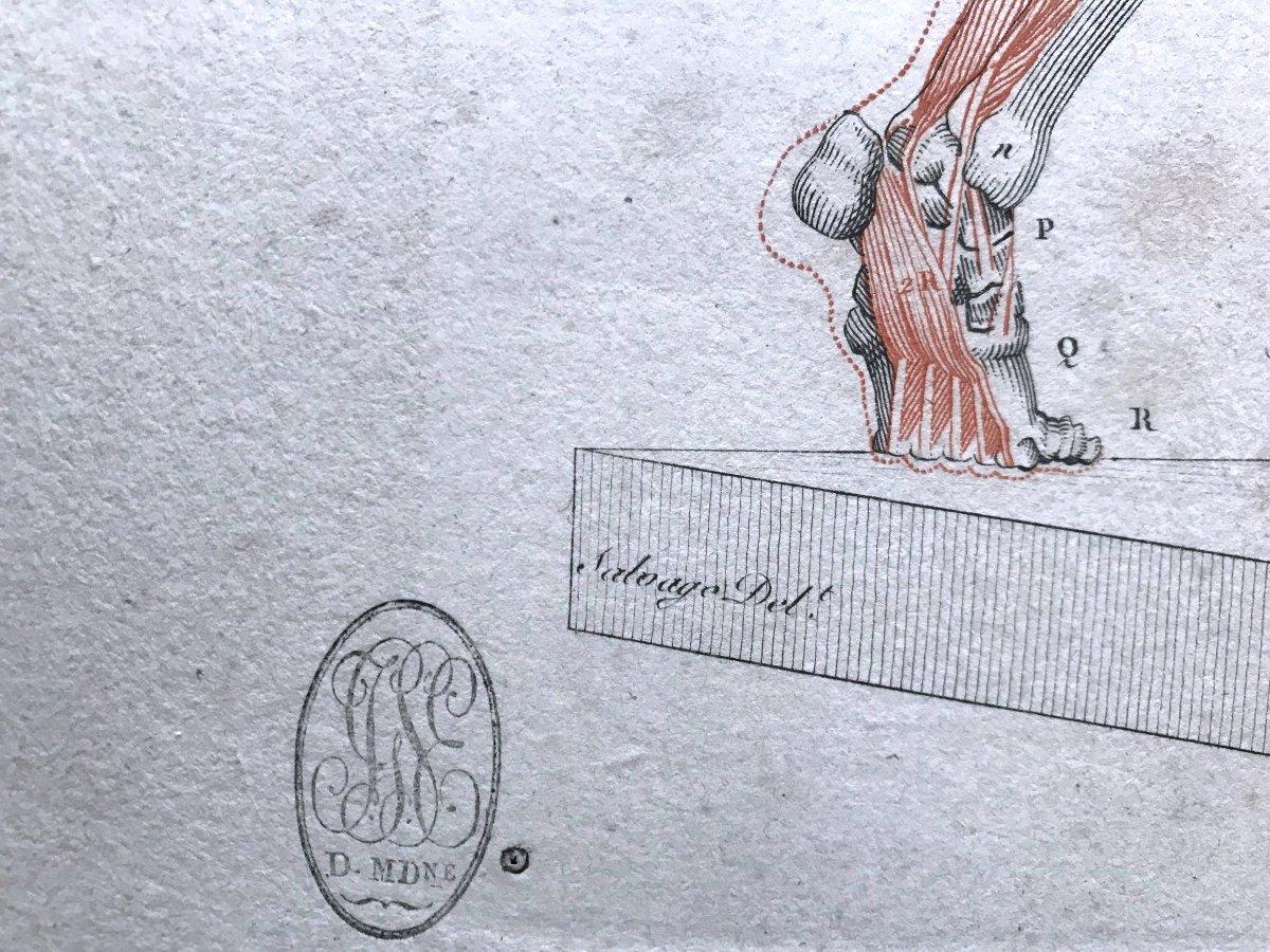 Jean-galbert Salvage (1770-1813)  Anatomie Du Gladiateur Combattant  XVIII Siècle N° 2-photo-3