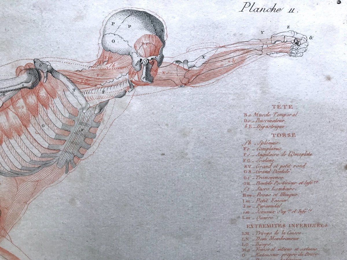 Jean-galbert Salvage (1770-1813)  Anatomie Du Gladiateur Combattant  XVIII Siècle N° 2-photo-4