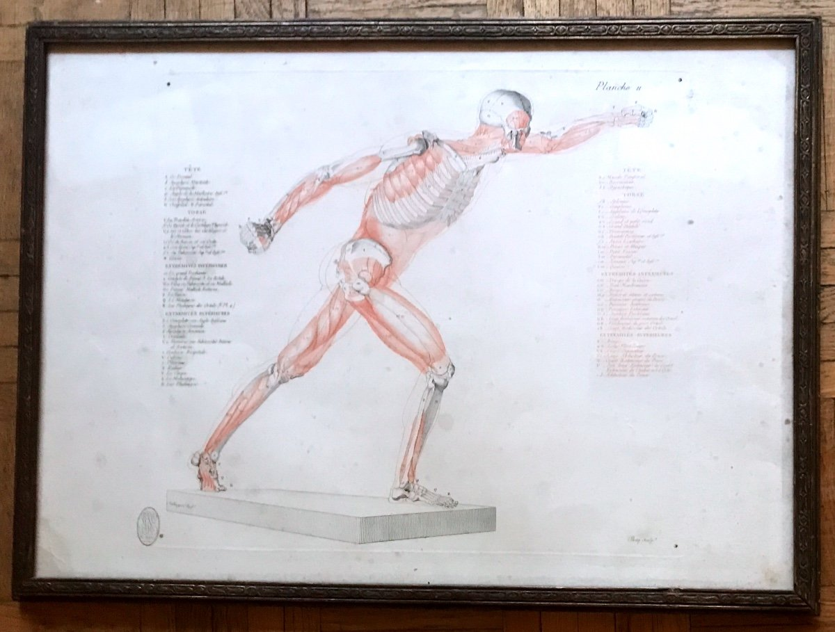Jean-galbert Salvage (1770-1813)  Anatomie Du Gladiateur Combattant  XVIII Siècle N° 2