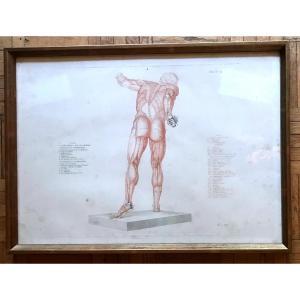 Jean-galbert Salvage (1770-1813) Anatomy Of The Fighting Gladiator XVIII Century