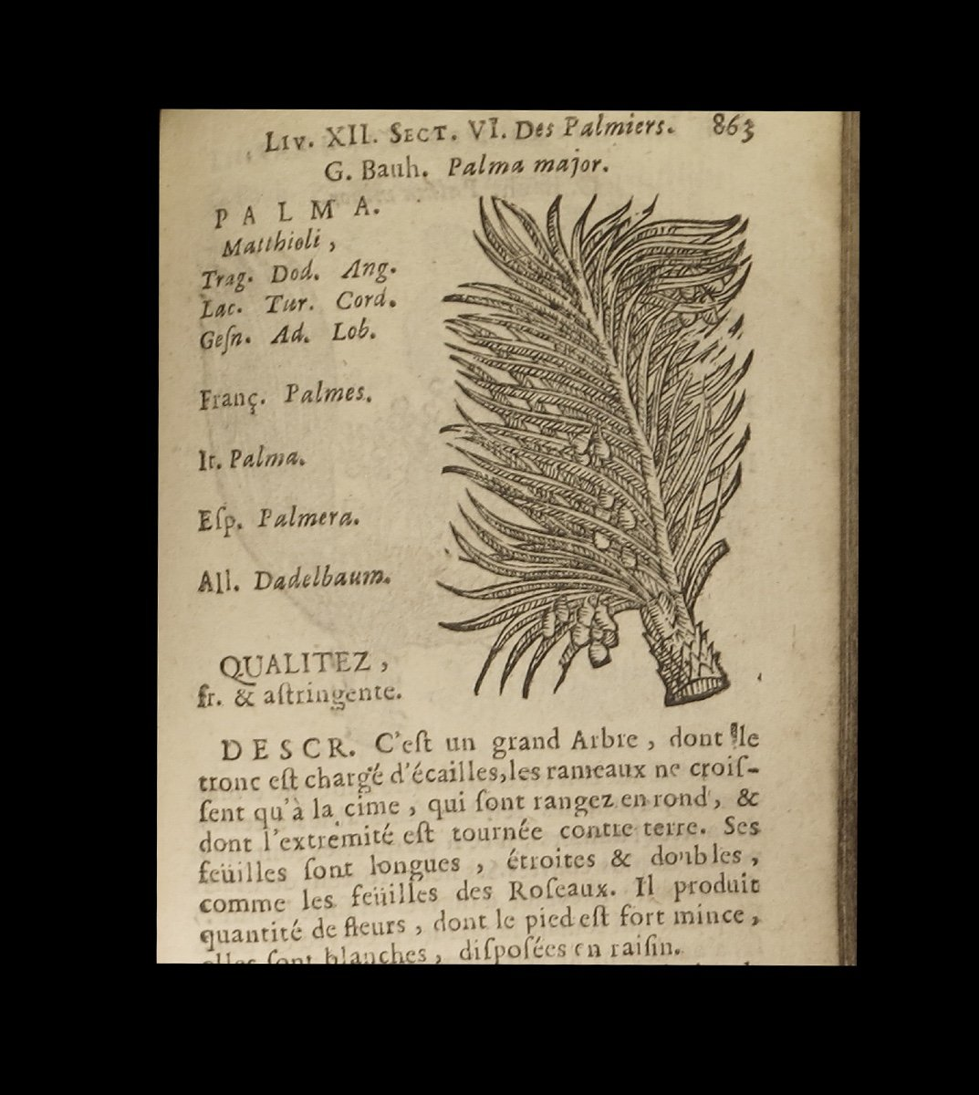 [botany Horticulture Medicine Phytotherapy] City - History Of Plants. 2/2. 1689-photo-3