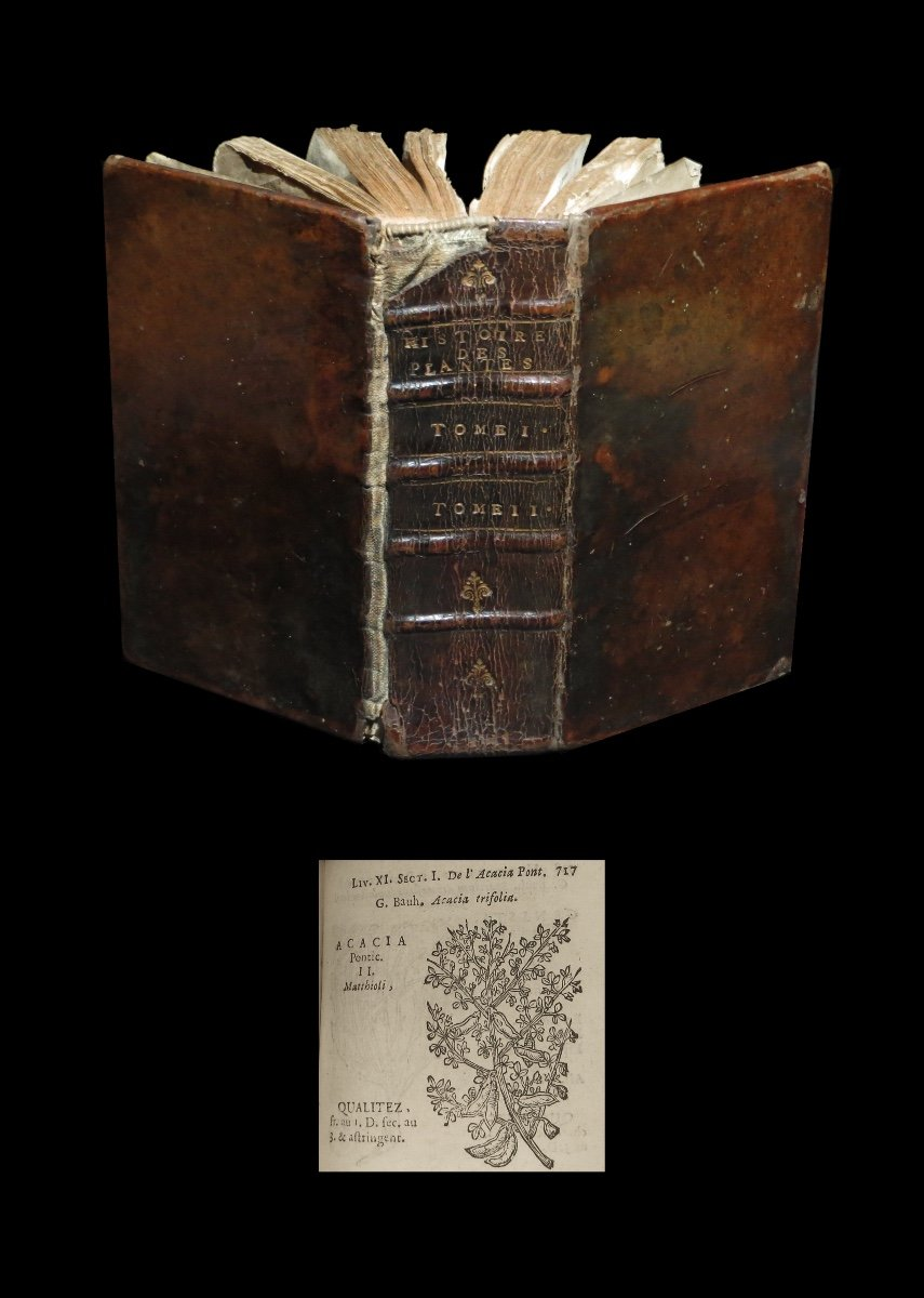 [botany Horticulture Medicine Phytotherapy] City - History Of Plants. 2/2. 1689