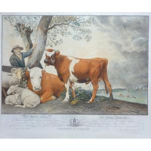 Alexandre Liernur (1769-1815), Le Jeune Taureau, d'Après Paul Potter, Eau-forte Rehaussée