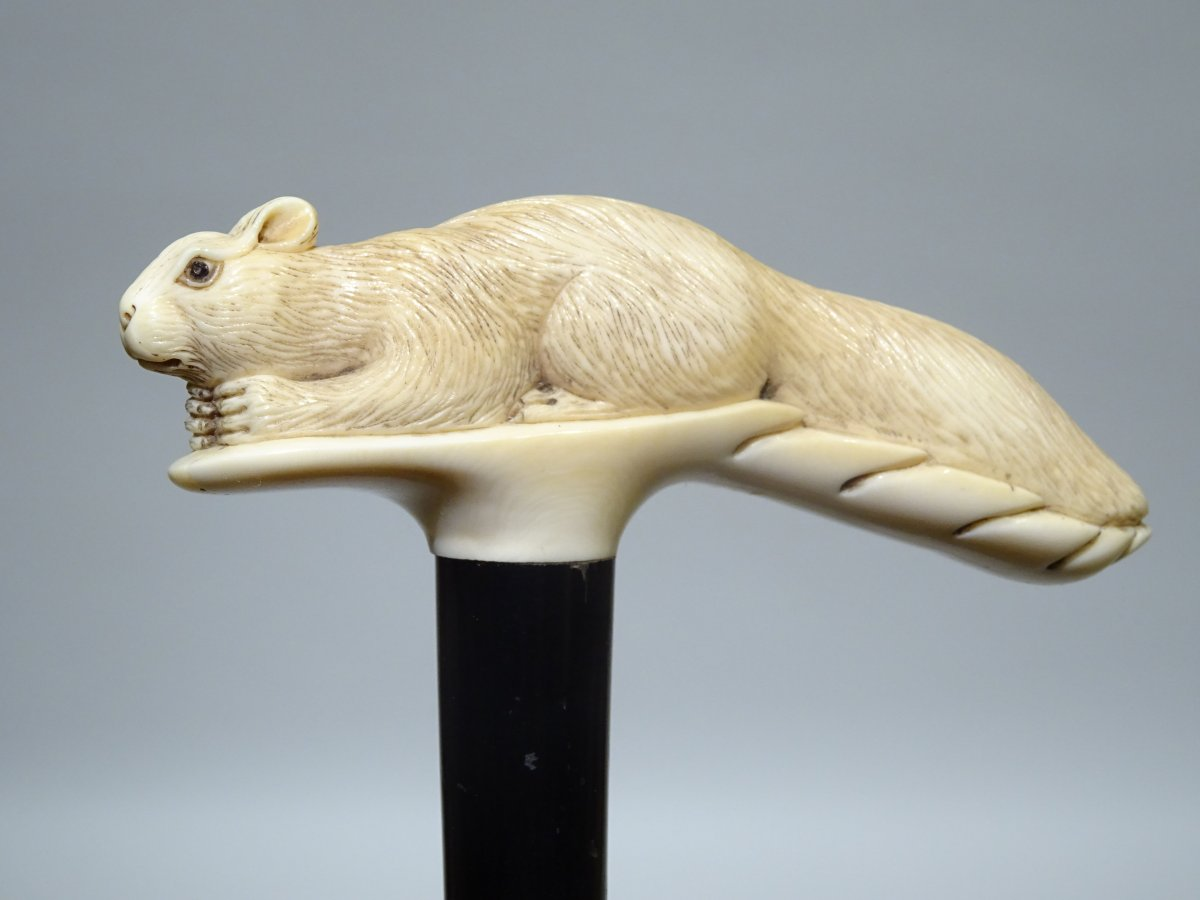 Great Cane On The Rare Squirrel Theme