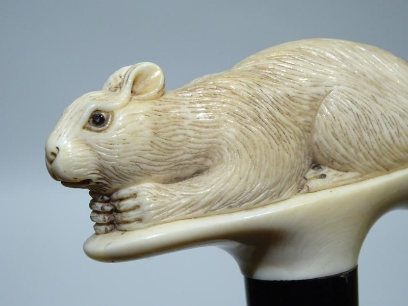 Great Cane On The Rare Squirrel Theme-photo-3