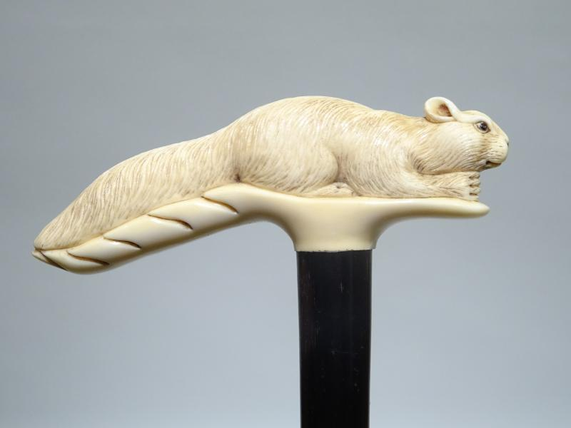 Great Cane On The Rare Squirrel Theme-photo-4