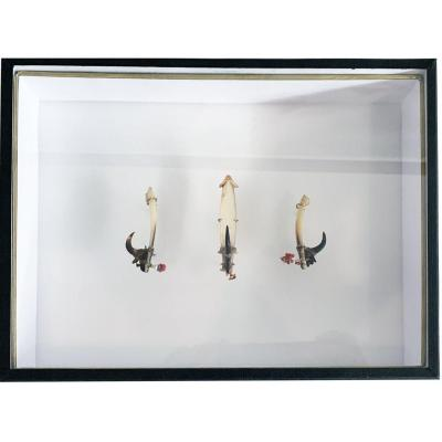 Solomon Islands Hooks Set
