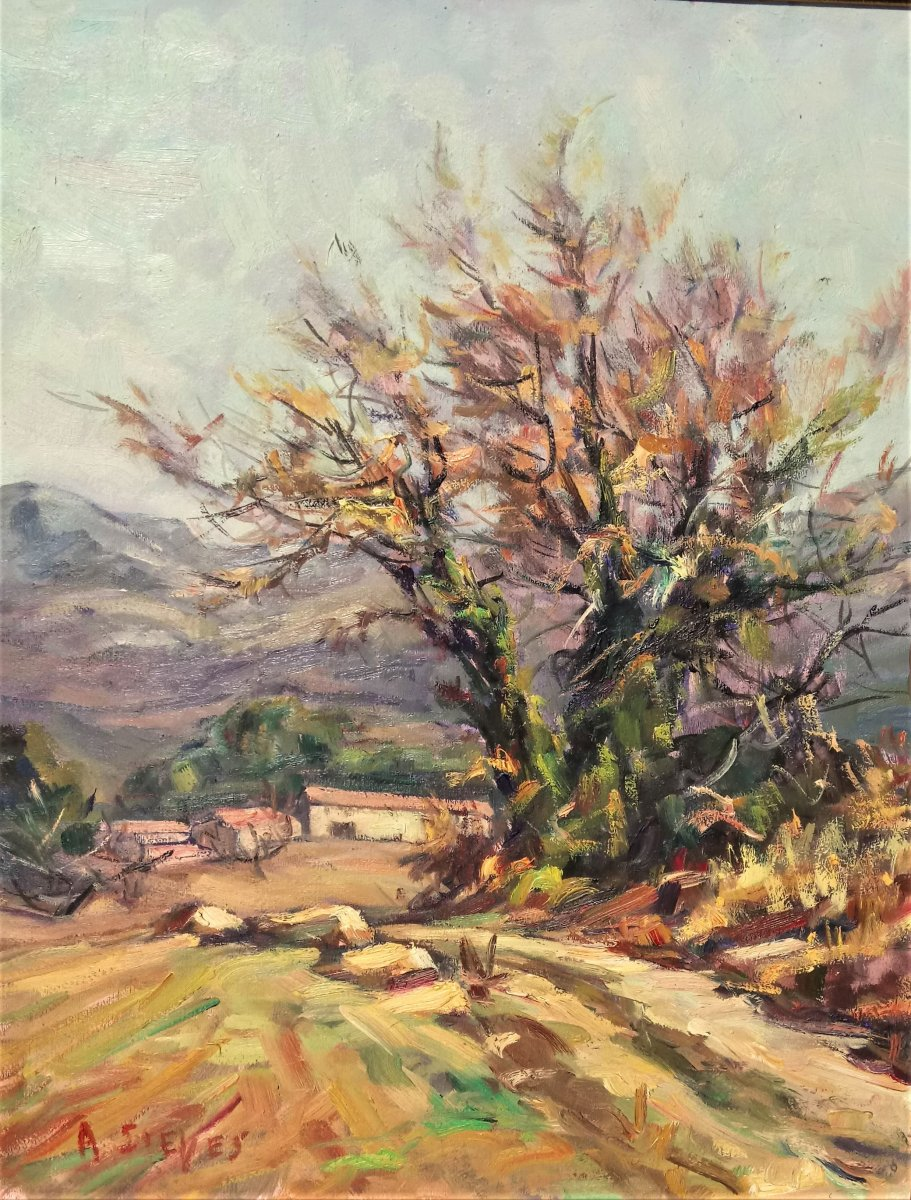 Sieyes. A (twentieth), Almond Blosooms, Oil On Canvas, With Frame