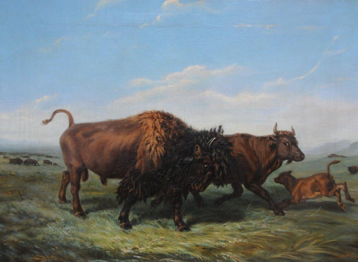 Bisons Dans La Plaine Américaine