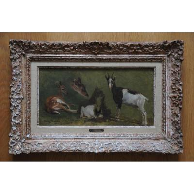 Etude de Faon et de Chèvre