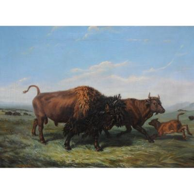 Bison In The American Plain