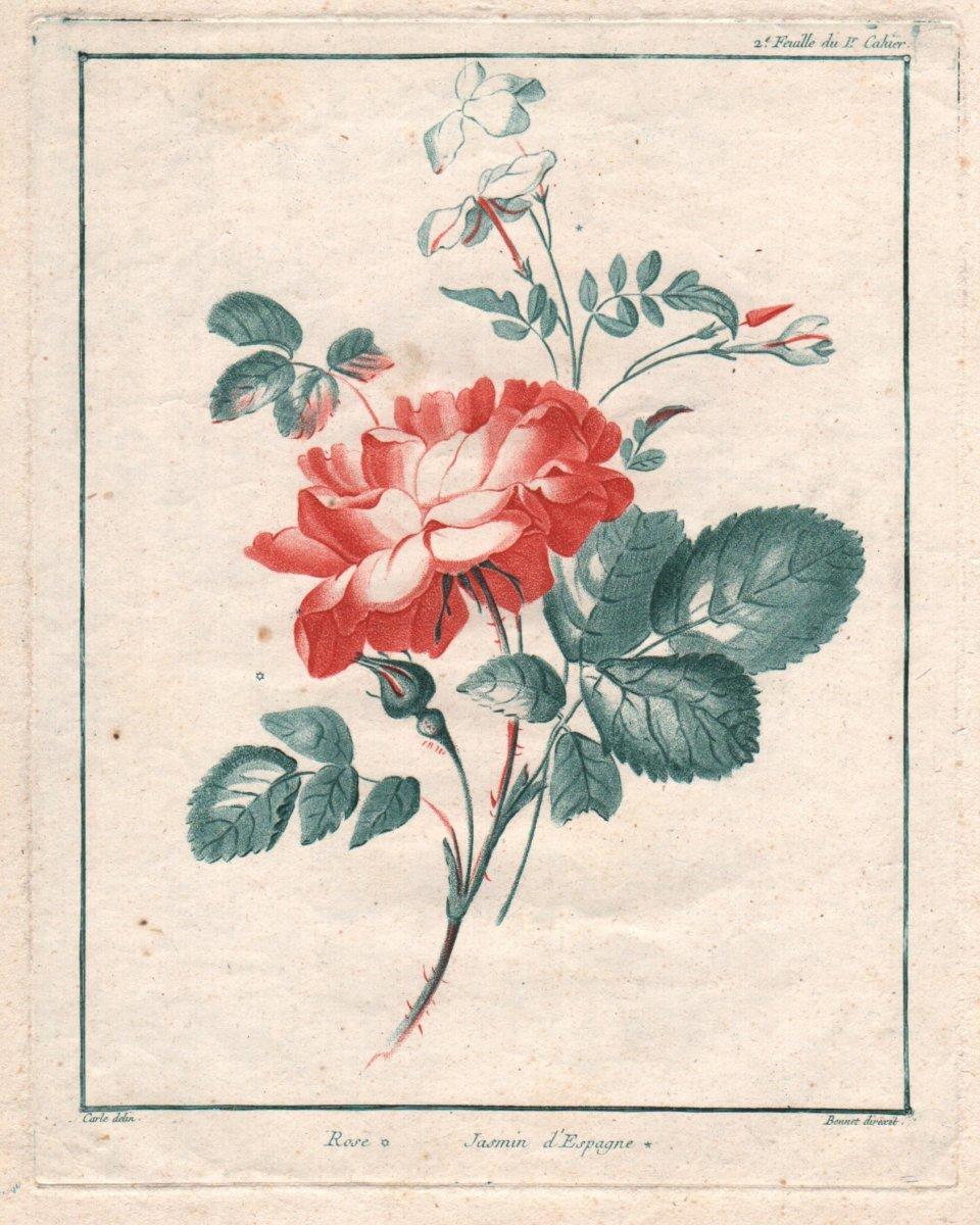 Louis Marin  Bonnet : Rose, Jasmin d' Espagne