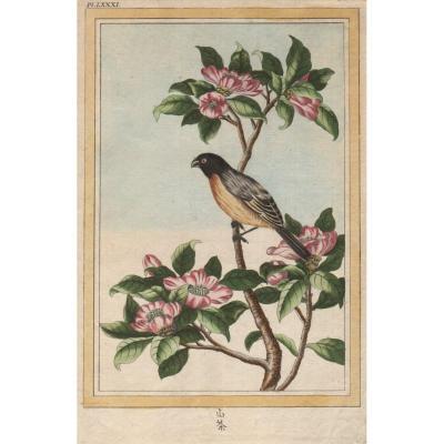 XVIIIth Engraving By Buchoz: Bird