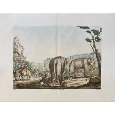 Etching Debut XIXth From Solvyns: Elephants And Camels