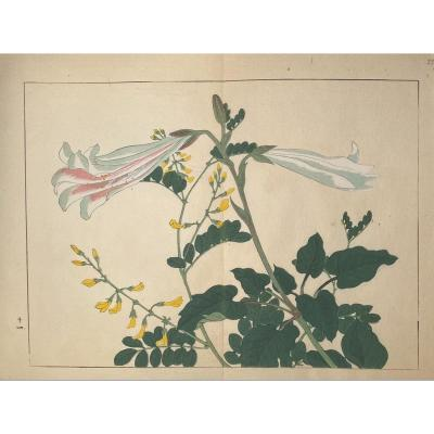 Japanese Print From Tessai: Lilies