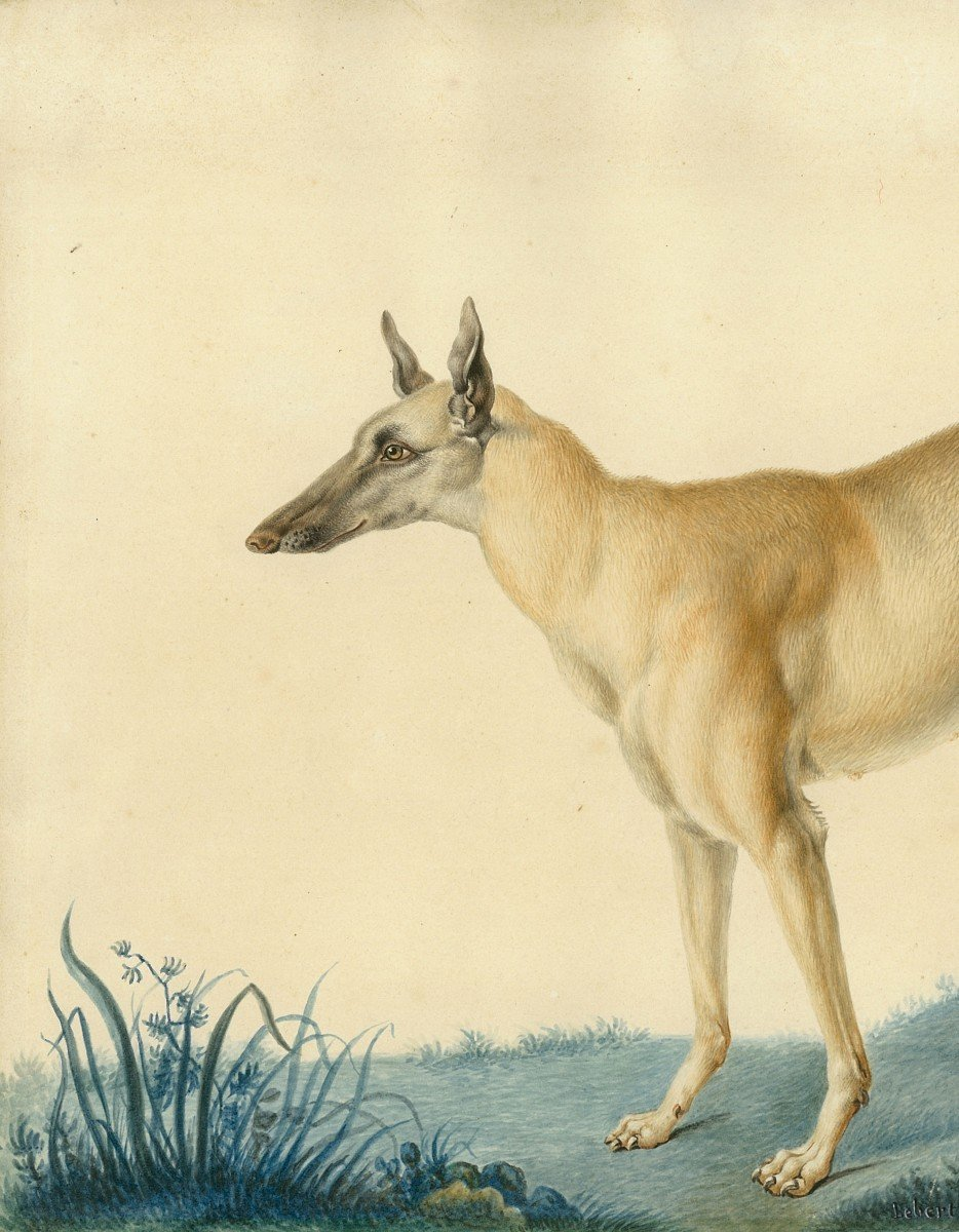 """Huet Nicolas II Le Jeune (1770-1830) Attrib. To """"a Greyhound"""" Watercolor, Annotated,dated,frame-photo-2"""