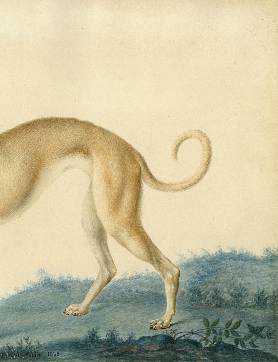 """Huet Nicolas II Le Jeune (1770-1830) Attrib. To """"a Greyhound"""" Watercolor, Annotated,dated,frame-photo-3"""