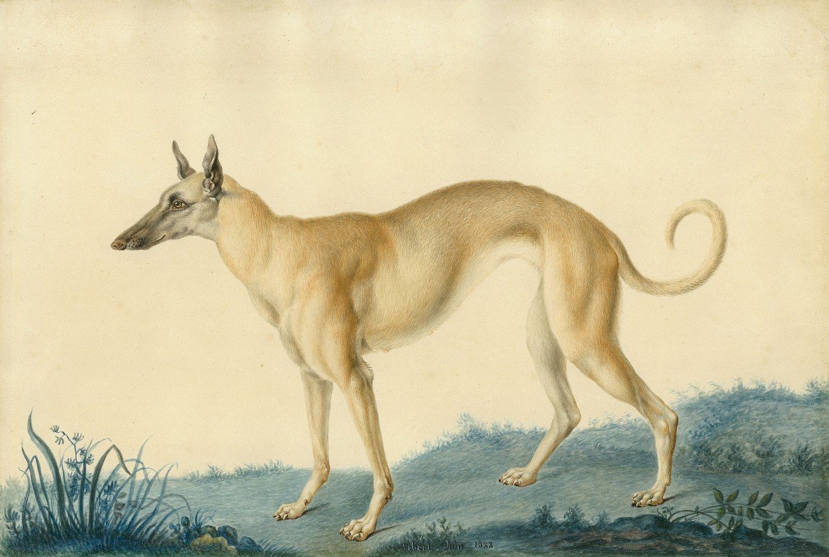 """Huet Nicolas II Le Jeune (1770-1830) Attrib. To """"a Greyhound"""" Watercolor, Annotated,dated,frame"""