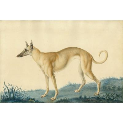 "Huet Nicolas II Le Jeune (1770-1830) Attrib. To ""a Greyhound"" Watercolor, Annotated,dated,frame"