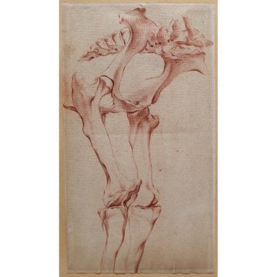 Ecole française fin 18e siècle, étude d'un squelette de cheval , dessin