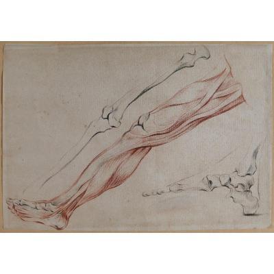 Ecole française fin 18e siècle, étude des muscles de la jambe, dessin