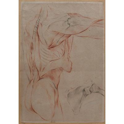 Ecole française fin 18e siècle, étude des muscles du corps, dessin