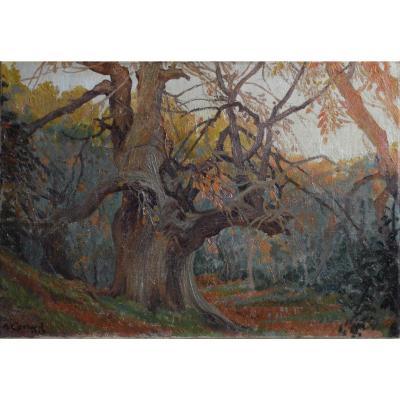 "Adolphe Cossard 1880-1952. ""undergrowth."""