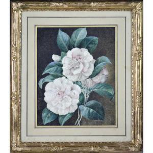 """C.V. Van  Spaendonck 1756-1840. Attribué à. """"Roses avec feuillage."""""""