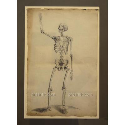 """ECOLE FRANCAISE XVIIIe """"Série de six dessins anatomiques 1790"""" Médecine écorché Auzoux Anatomie"""