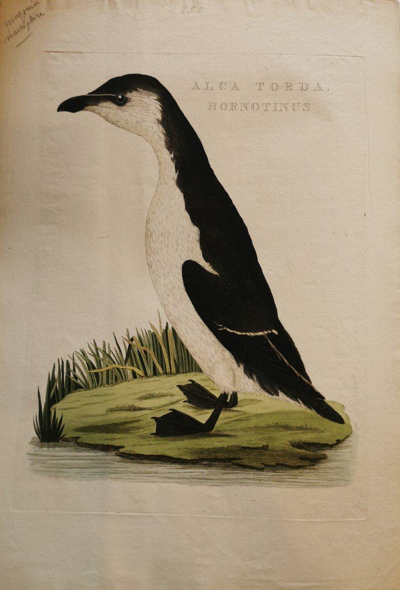 Cornelis Nozeman Naturaliste Neerlandais